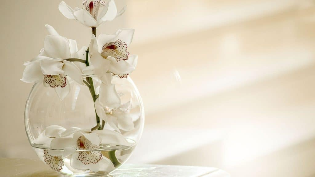 what is the best lighting for dendrobium orchids?
