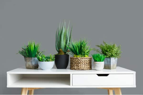 Why you should get a plant?