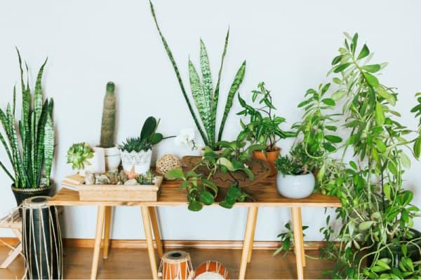 How do I keep my indoor plants healthy?