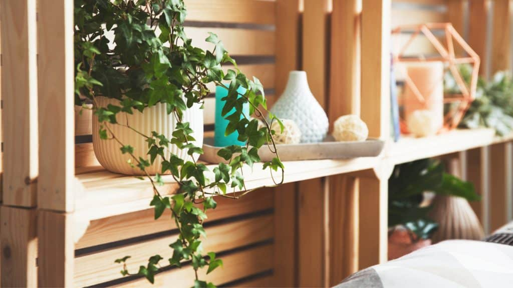 English Ivy: Airborne Mold Reducer bedroom plant
