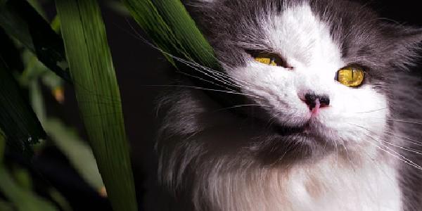 cat biting on plant