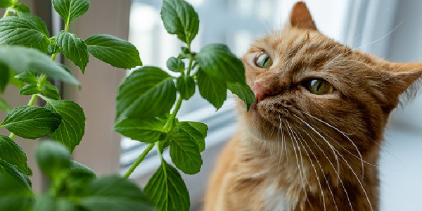 cat looking at plants