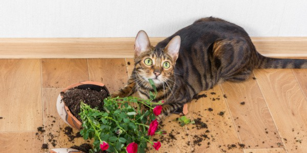 cat knocked over plants