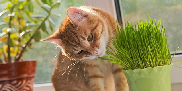 cat nibbling on plants