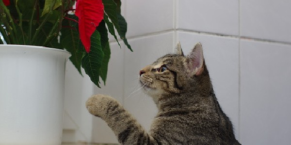 cat messing with plant