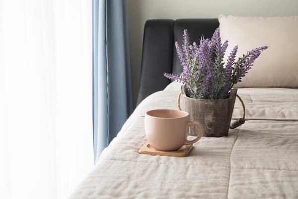 giving lavender plants as a gift