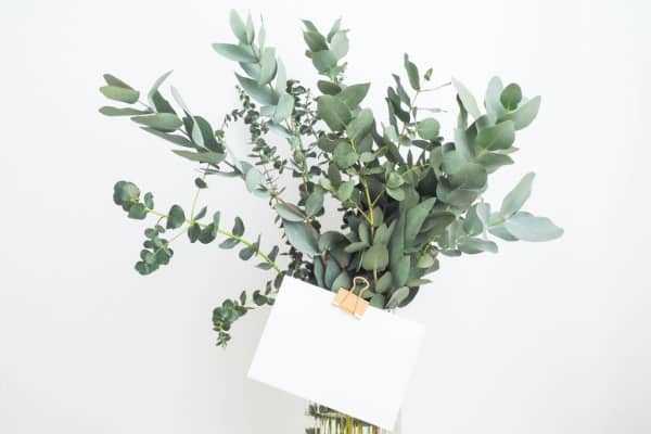gifting a plant to others