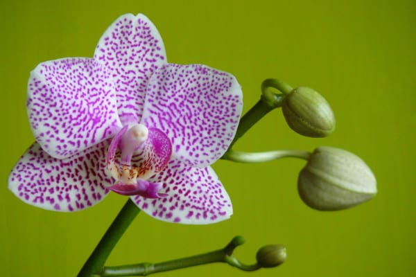 an up close purple orchid