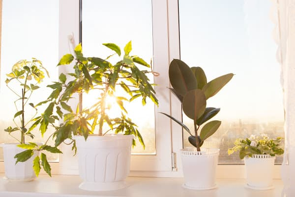 plants being placed in front of w window for natural lighting