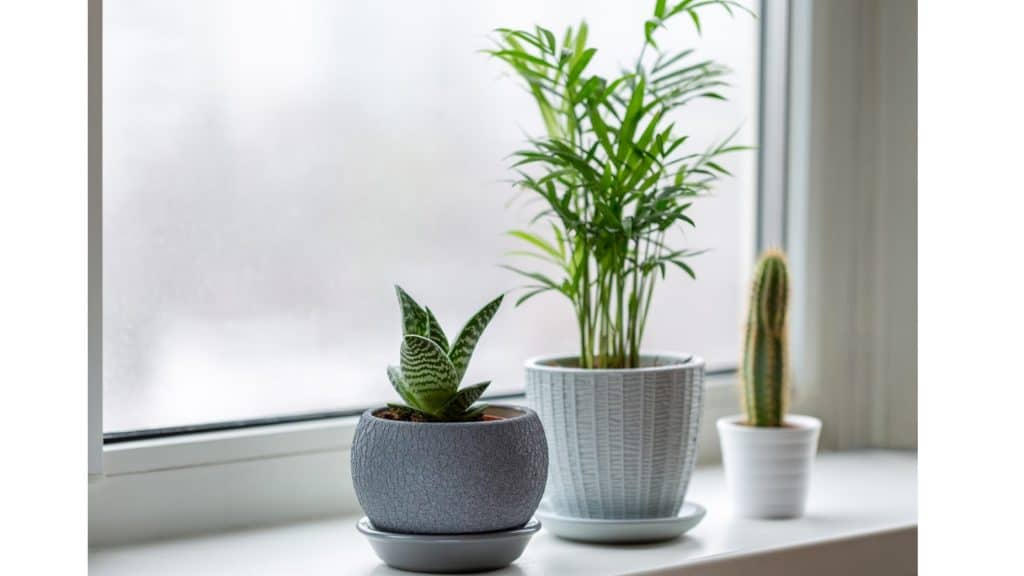 tropical houseplants on the window sill in the winter