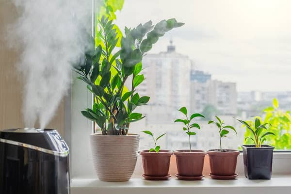 humidifier spraying water vapor in a room for indoor plants to increase humidity