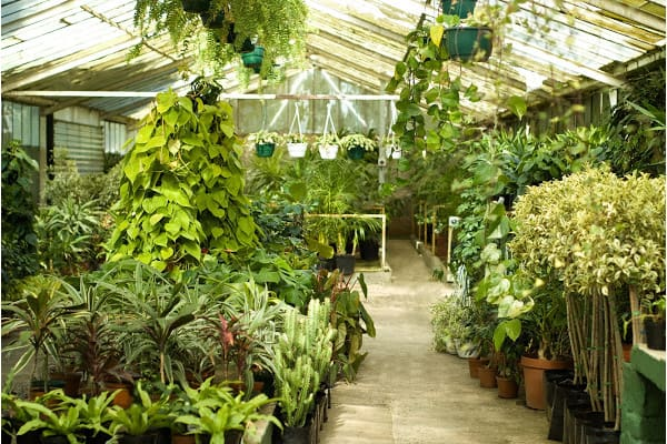 a greenhouse with many plants grouped together