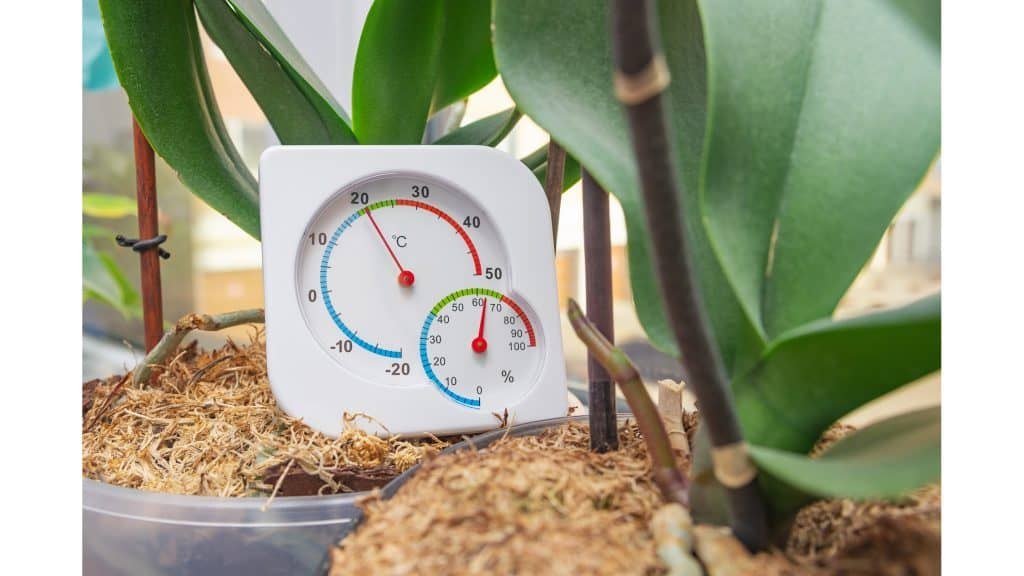 soil moisture in a plant to measure the humidity in a room for indoor plants