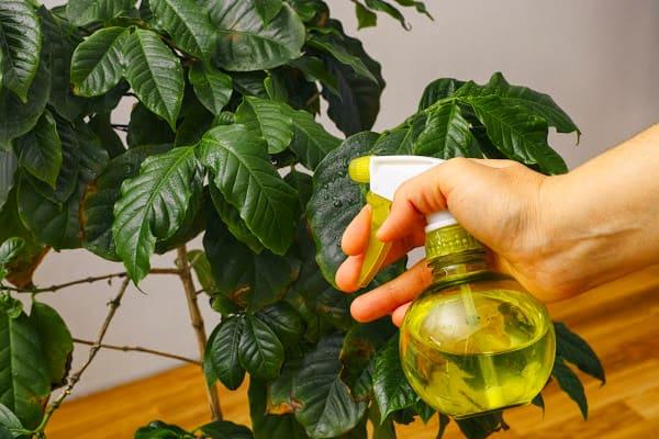 Misting plants indoors for added moisture