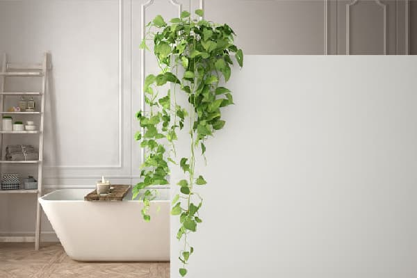 a long vine plant hanging in the bathroom