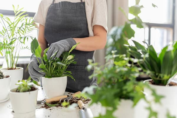 a lady repotting her plants