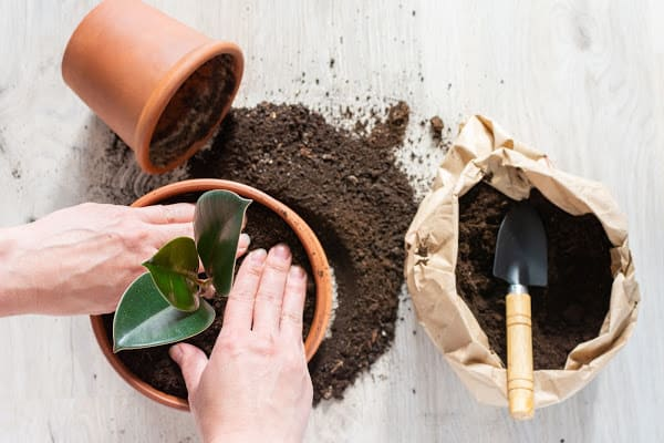 mixing in the potting mix to repotting a plant