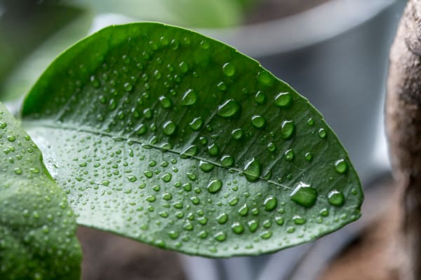 a close up of water vapor on leaves