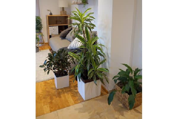grouping plants together so that misting can be more effective to raise humidity levels