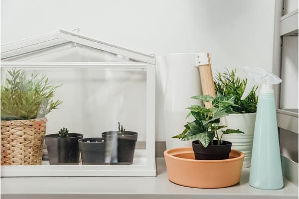 a desk size greenhouse with a mister to help raise humidity levels