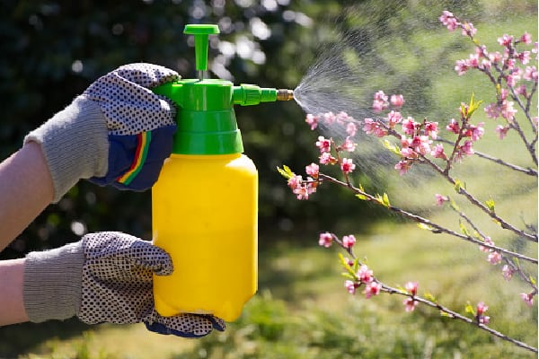 a person spraying plant food, possibly schultz liquid plant food plus, onto a plant