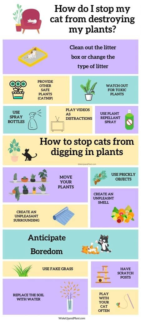 an infographic that describes how to stop your cat from destroying your houseplants.