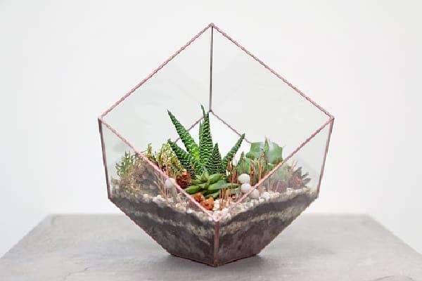 succulents placed in a glass terrarium