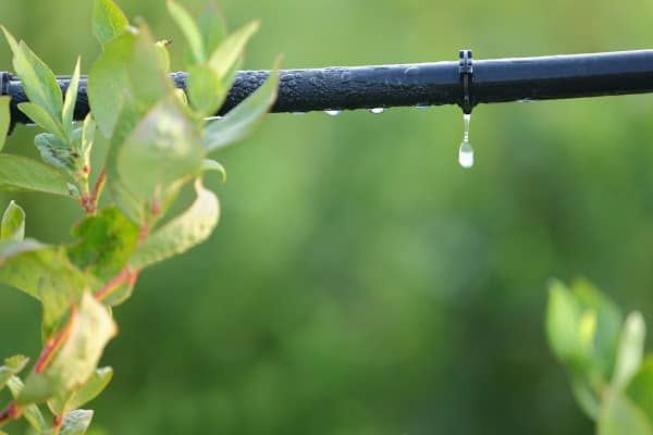 an irrigation system for plants
