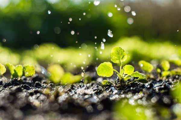 water falling down on plants