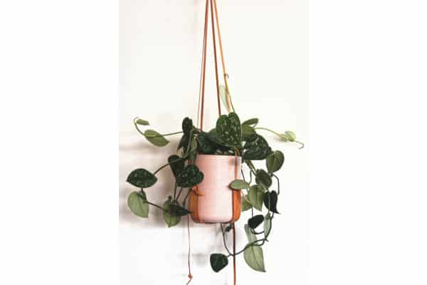 a hanging houseplant in a pink pot