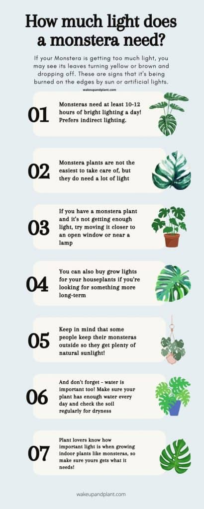 how much light does a monstera need infographic