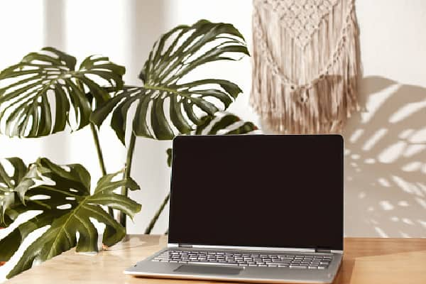 a tropical monstera plant near a laptop in the living room receiving lots of bright lighting (a tip from how much light does a monstera need article)