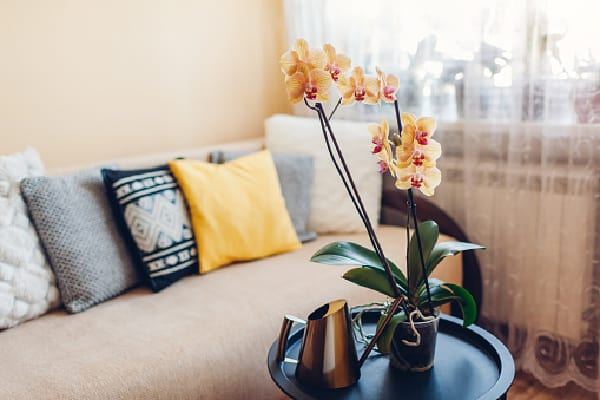 Orchid placed in the living room near a window