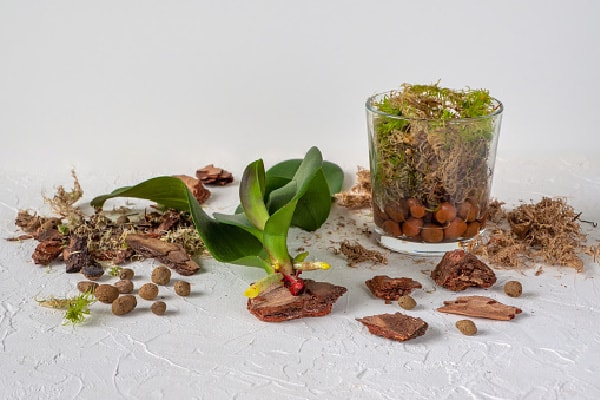 ingredients needed to transplant an orchid