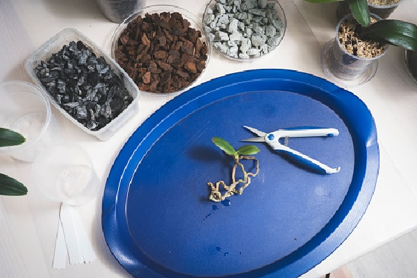 tools needed to repot an orchid into a bigger pot